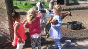 Holmeleigh Farmyard