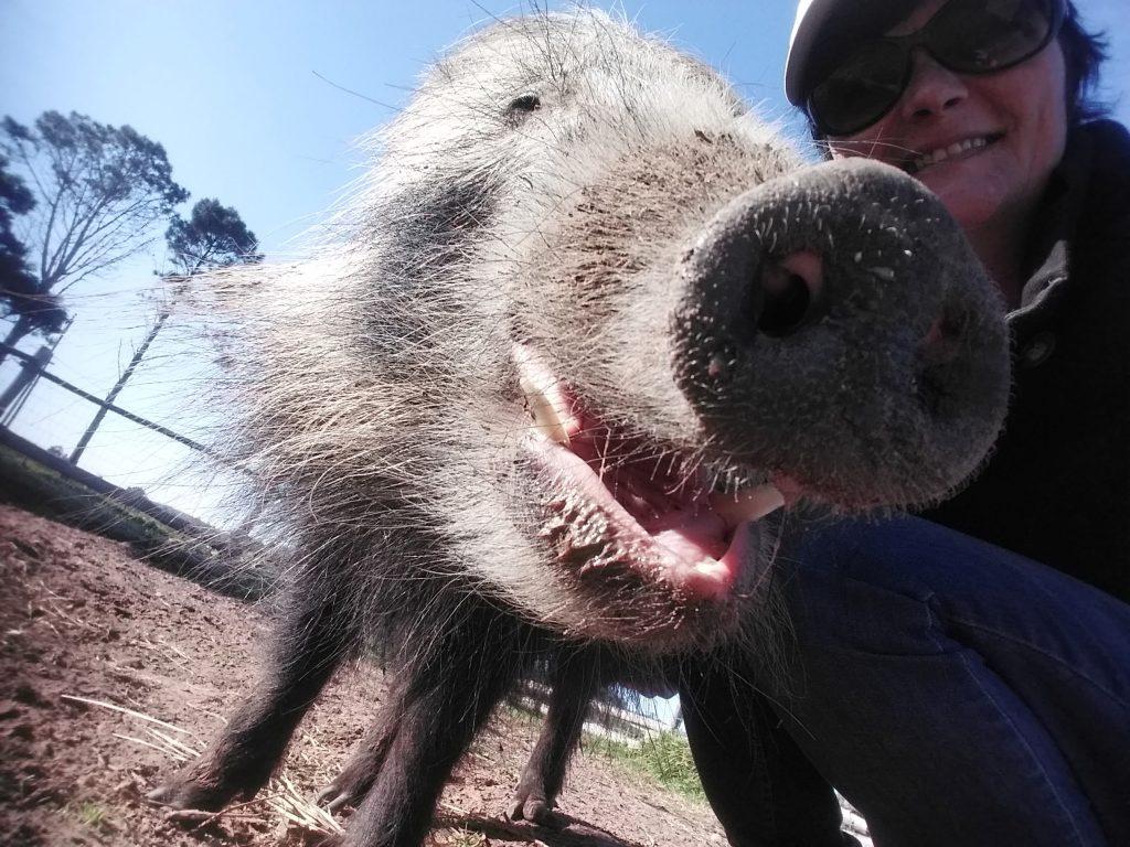 Animals in Wonderland - Activities - Port Elizabeth