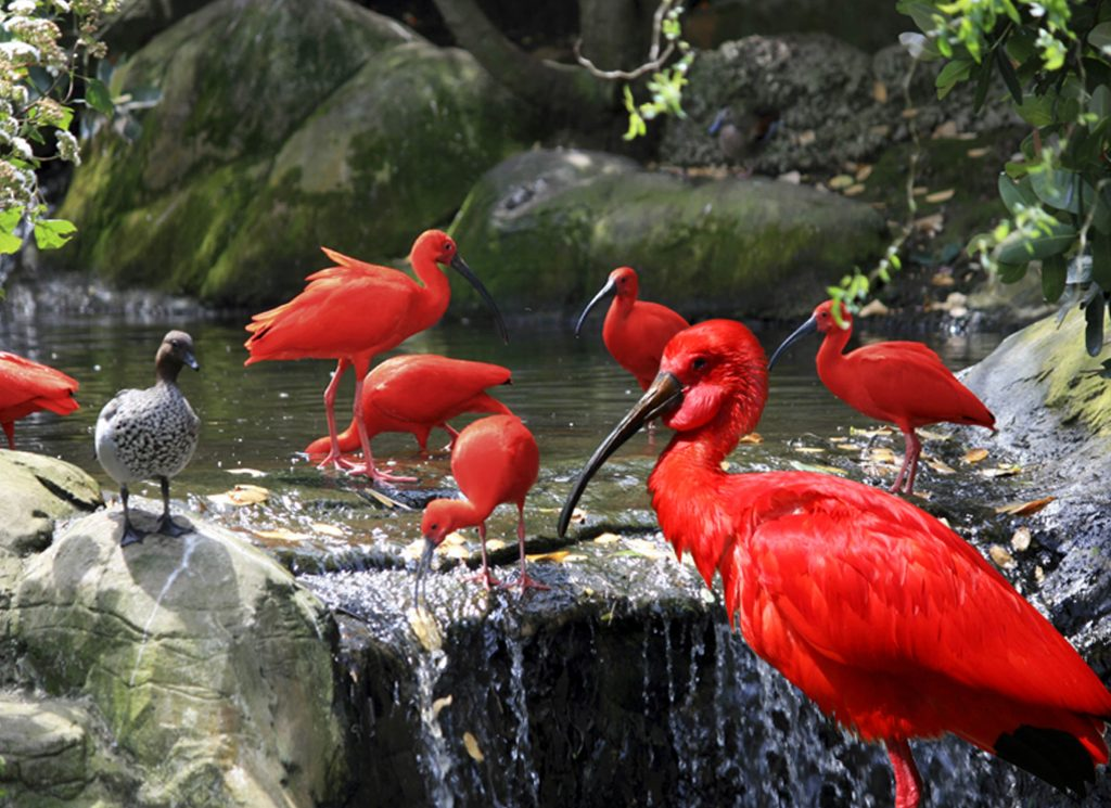 SAASA Birds of Eden