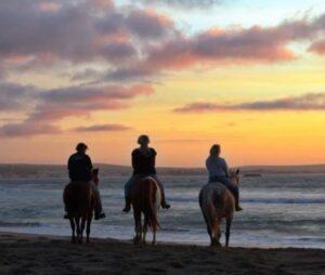 Drikus horse Trails